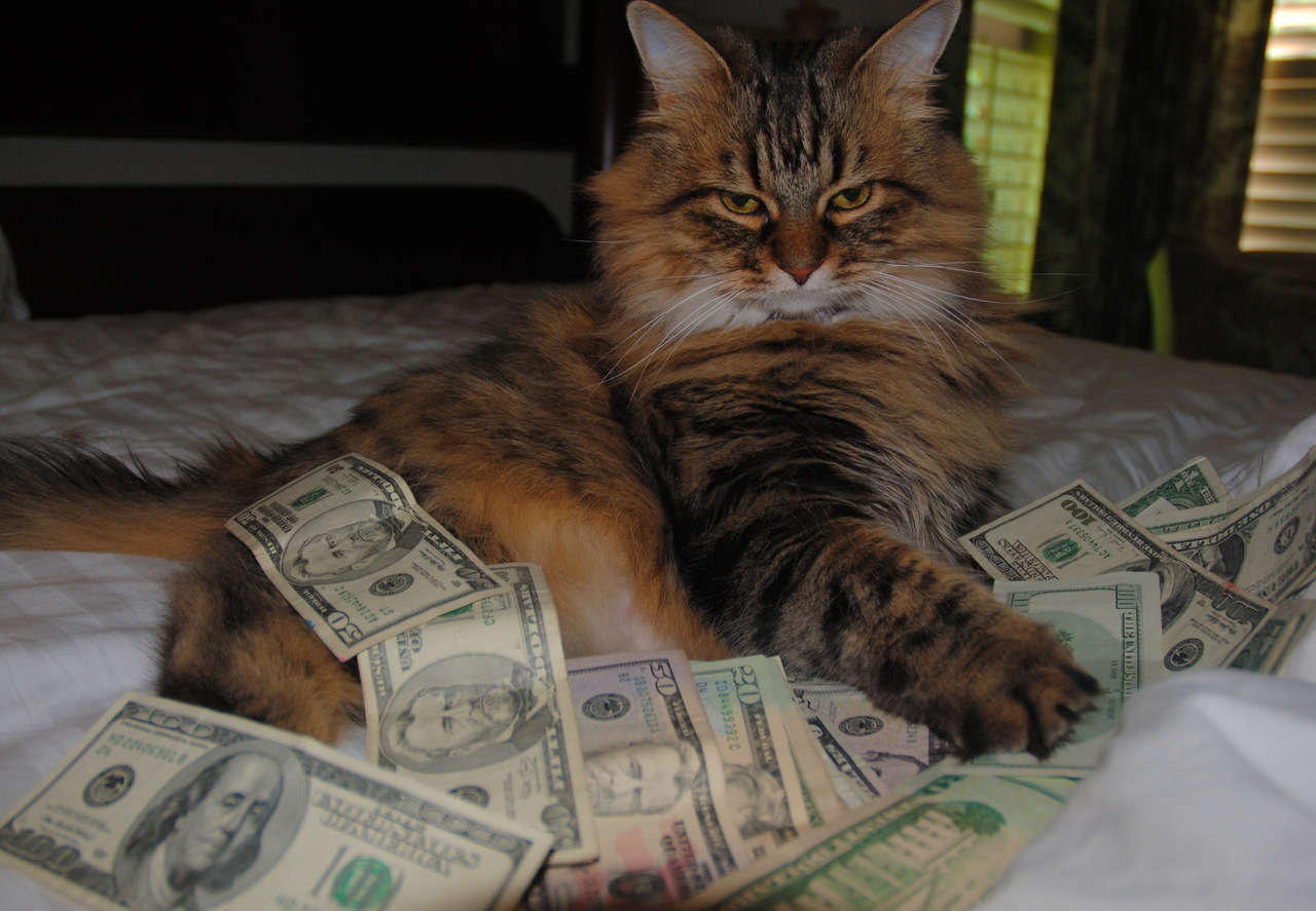 Cats Rolling in Money More Than Funny Cat Money