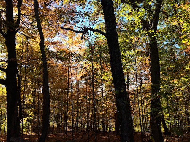 The foliage is in its full glory at Mohonk Mountain preserve right now. Photo: Evan Groll