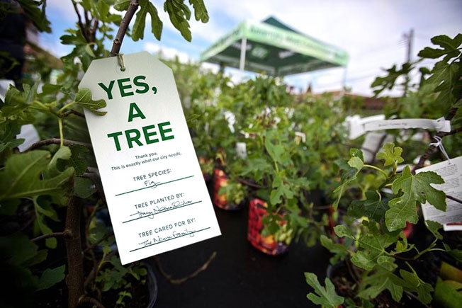 Plant a fruit tree this weekend--New York Restoration Project is holding giveaways throughout Brooklyn. Photo: New York Restoration Project