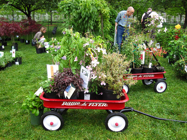 The Brooklyn Botanic Garden's annual plant sale is back in the Cherry Esplanade today. Photo: Rebecca Bullene via bbg.org