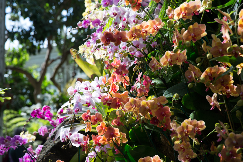 Get out and ogle the thousands of orchids at the New York Botanical Garden before their orchid show closes April. 17. Photo: New York Botanical Garden