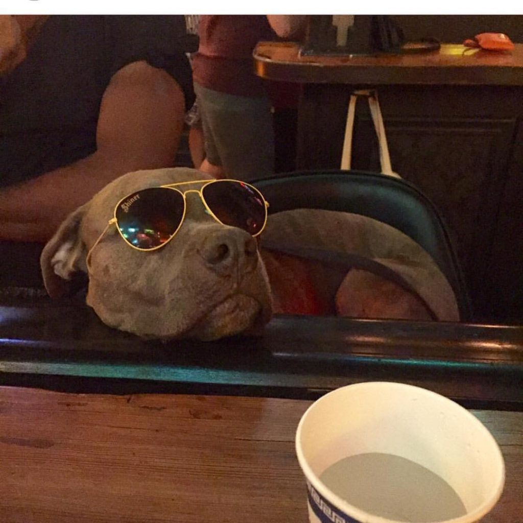 This Do or Dive bar hound may or may not be at the Immersion tomorrow, but one can hope. Photo: Do or Dive
