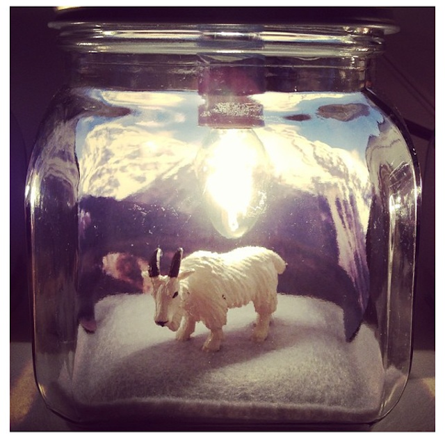 Choose any animal or background for these customized handmade diorama lamps. Photo: smallhome