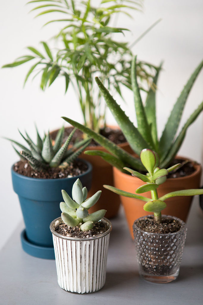 The-Everygirl-Easy-Indoor-Plants-Succulents-and-Cactus