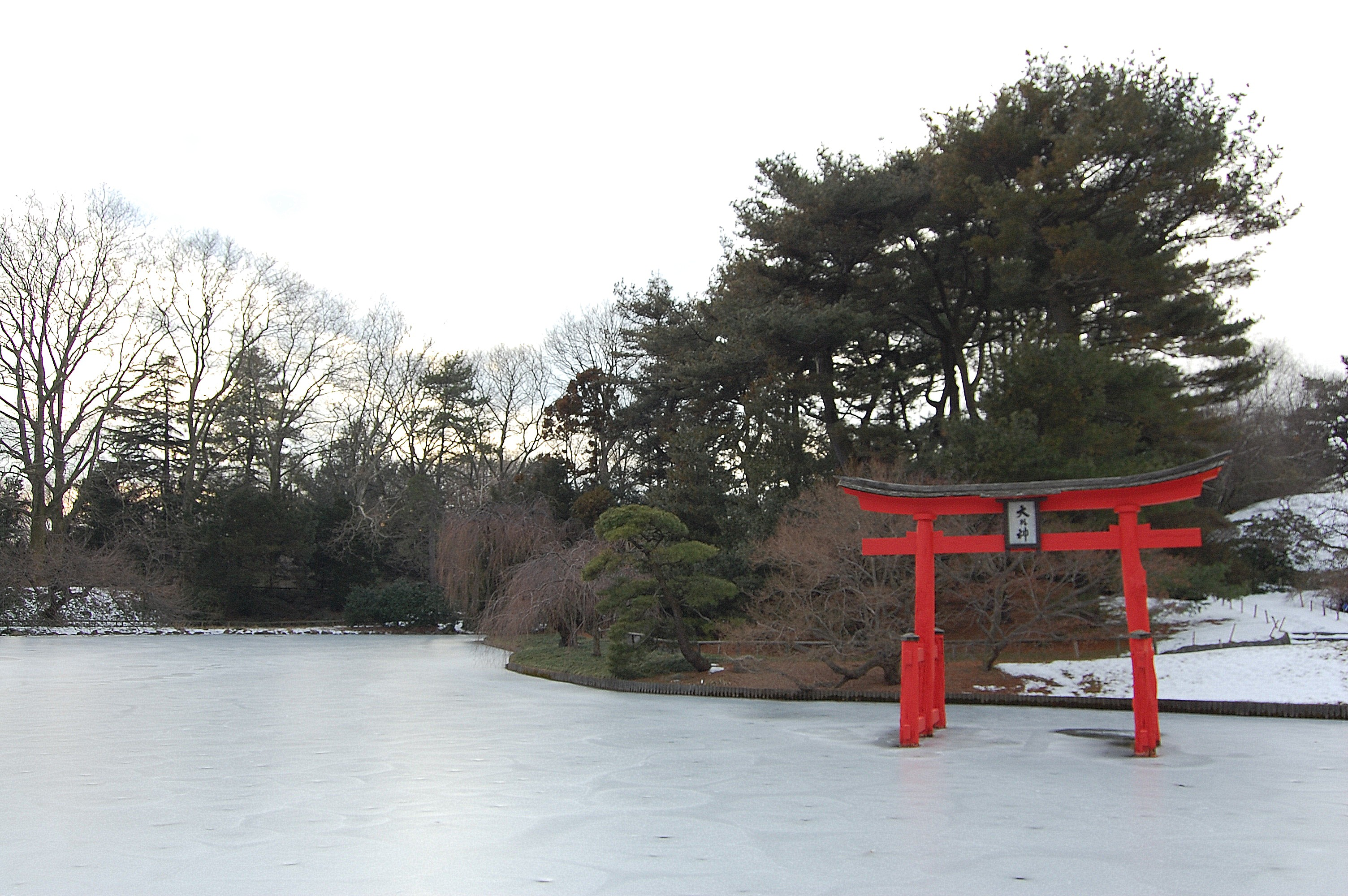 a wintertime guide to the brooklyn botanic garden
