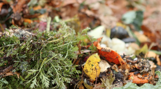 Once composted these food scraps will become rich growing material for new plants. Photo: Althea Chang