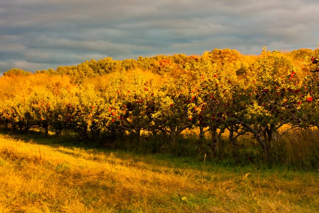 Spend the day picking apples upstate at Stone Ridge Orchard with the folks from Brooklyn Kitchen. Photo: Stone Ridge Orchard/Adam Jeffrey