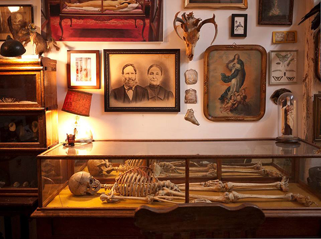 Morbid Anatomy Library 2