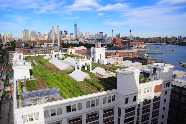 Head to a rooftop feast on Wednesday. Photo: Brooklyn Grange