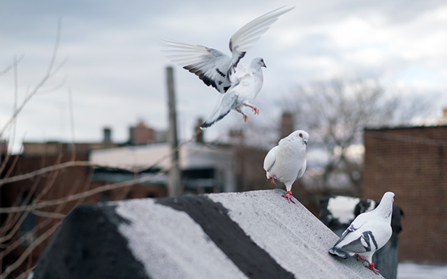"""A few members of the """"Fly By Night"""" flock gather on a rooftop. Photo: Creative Time/Will Star/Shooting Stars Pro"""