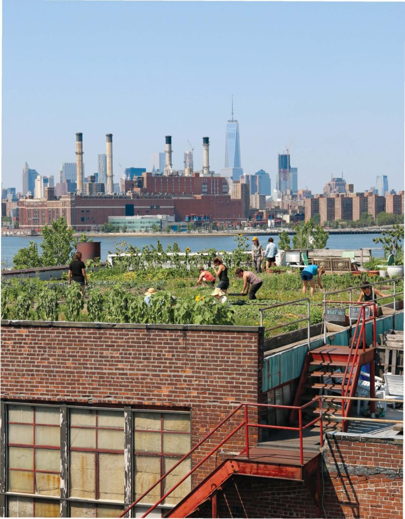 Your garden may not have quite the same view as Eagle Street Rooftop Farm. Photo: Naima Green