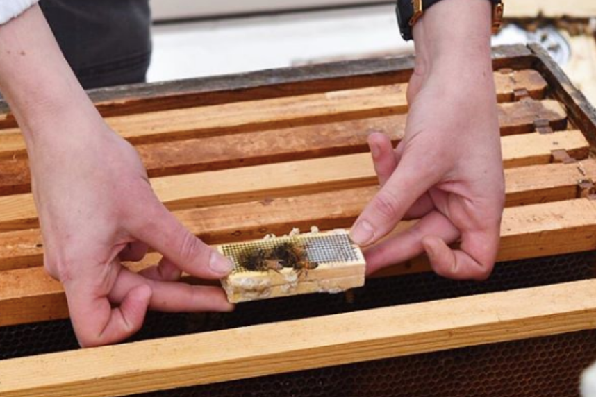 Learn how the ladies do it all at an intro to beekeeping class at Brooklyn Grange