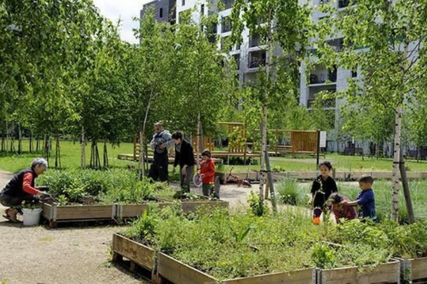 skate-garden-community-garden